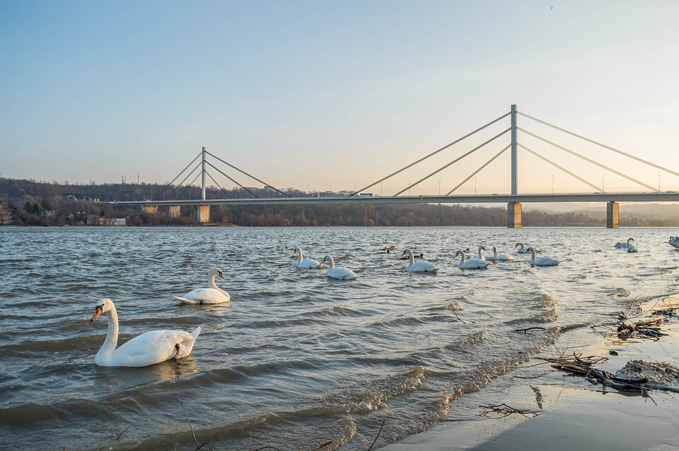 Danube Novi Sad